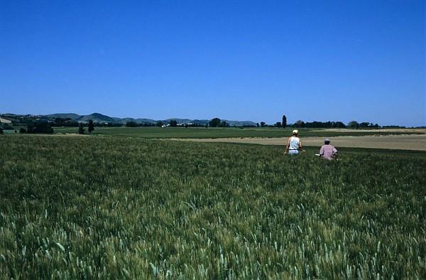 Inquiétudes pour la production de céréales françaises